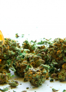Cannabis Dispensary Management Certification (CCDM)